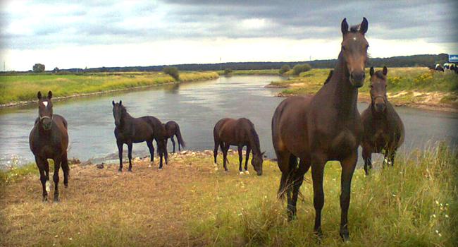 Pferde Zucht Spiele